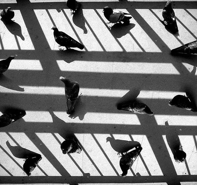fotografie-bianco-nero-surreali-alexey-menschikov-18