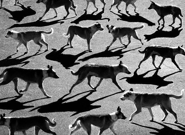 fotografie-bianco-nero-surreali-alexey-menschikov-32