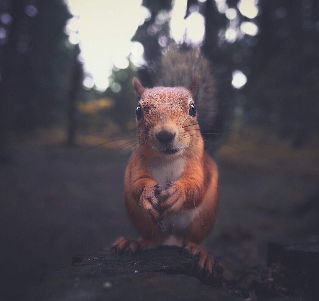 ritratti-ravvicinati-animali-foresta-konsta-punkka-01