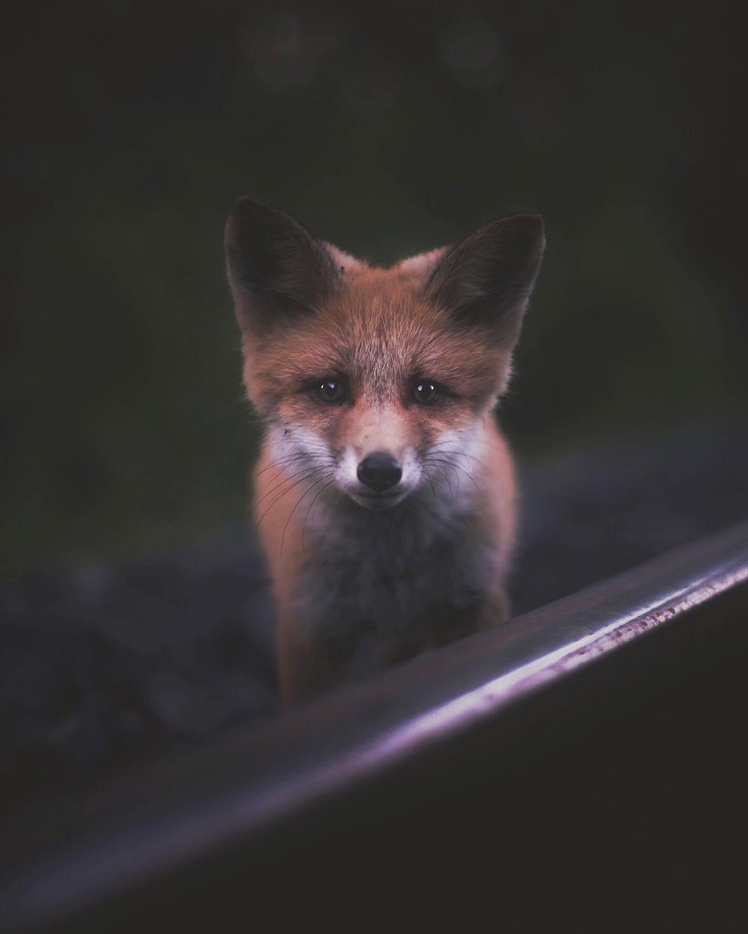 ritratti-ravvicinati-animali-foresta-konsta-punkka-03