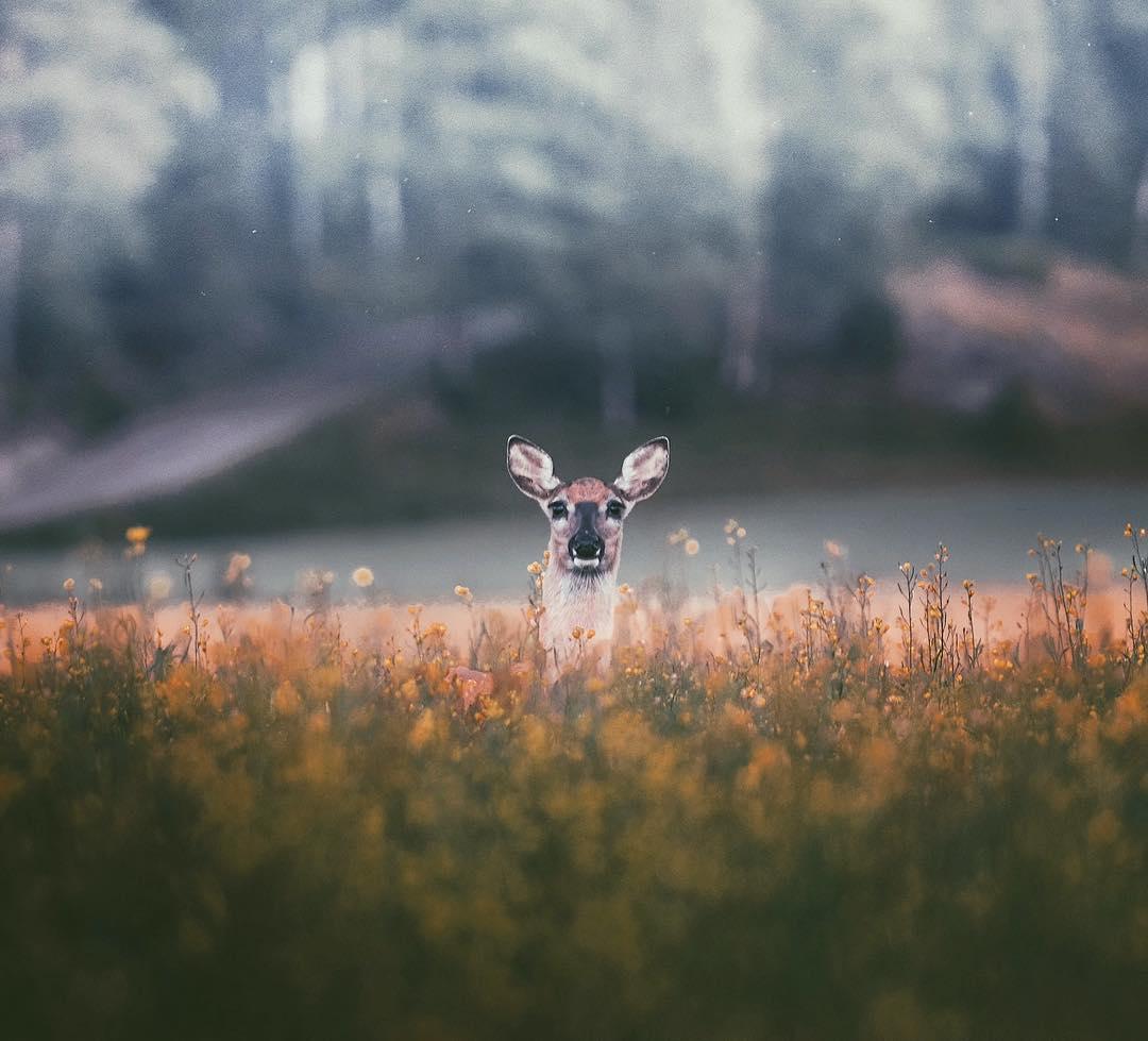 ritratti-ravvicinati-animali-foresta-konsta-punkka-06