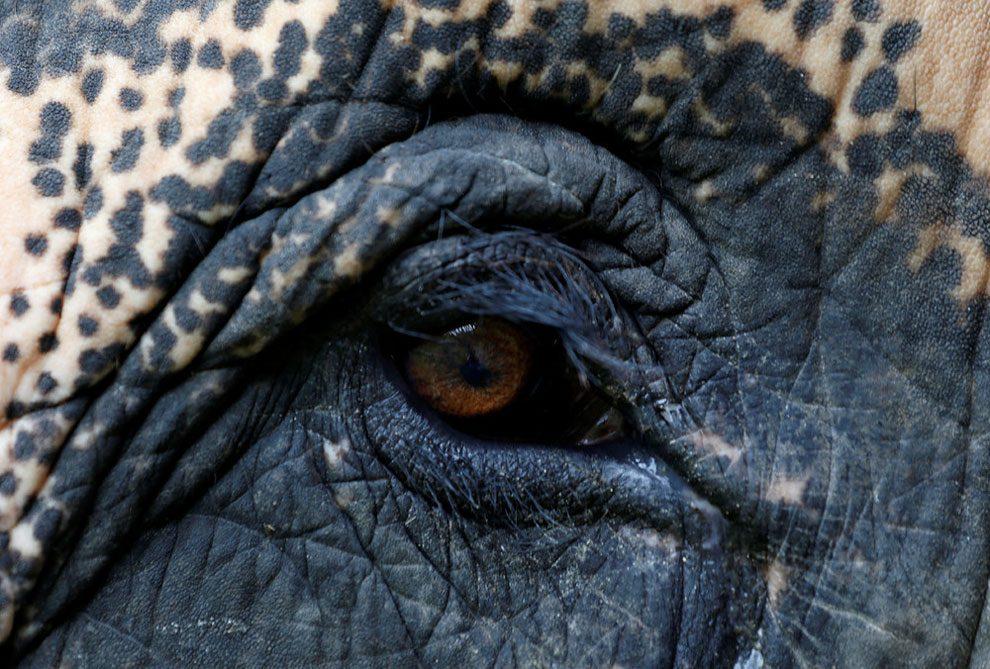 elefanti-senza-zampa-protesi-arto-artificiale-tailandia-04