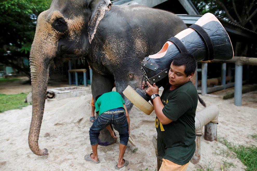 elefanti-senza-zampa-protesi-arto-artificiale-tailandia-05
