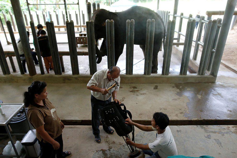 elefanti-senza-zampa-protesi-arto-artificiale-tailandia-08