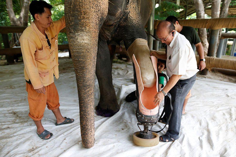 elefanti-senza-zampa-protesi-arto-artificiale-tailandia-09