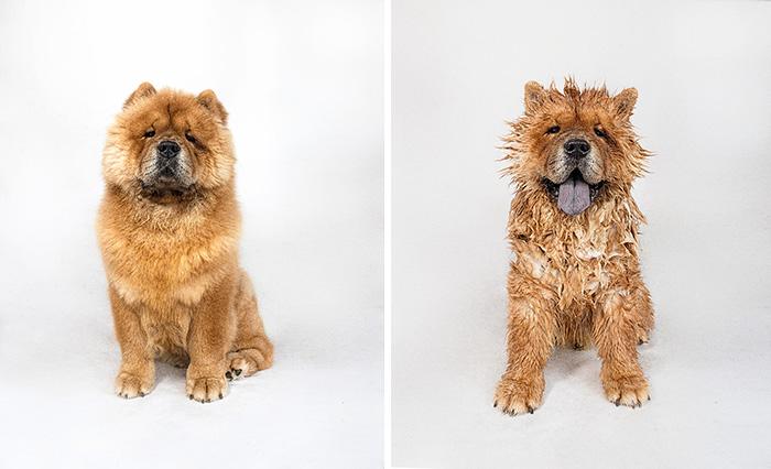 foto-cani-bagnati-prima-dopo-bagno-02 - KEBLOG