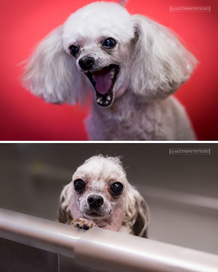 foto-cani-bagnati-prima-dopo-bagno-03