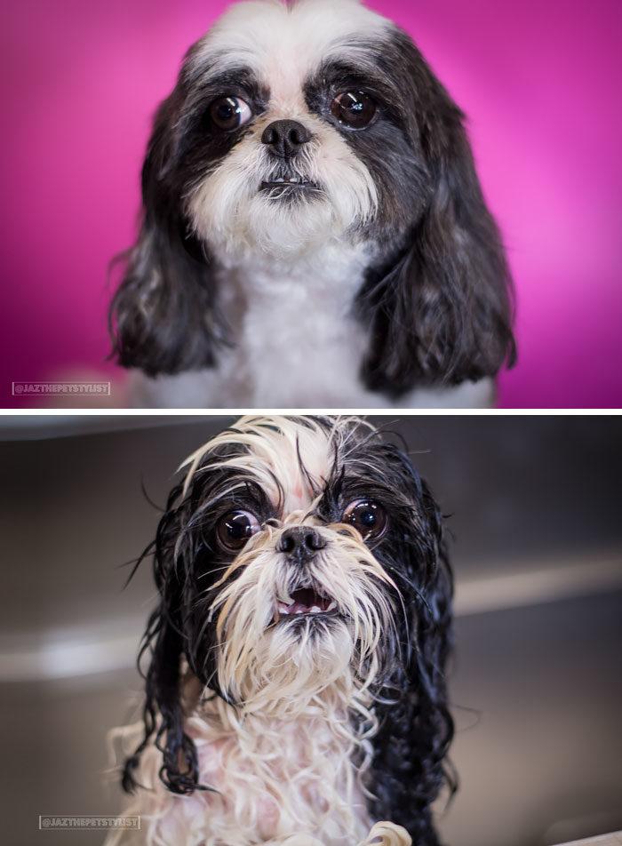foto-cani-bagnati-prima-dopo-bagno-04