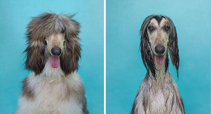 foto-cani-bagnati-prima-dopo-bagno-11
