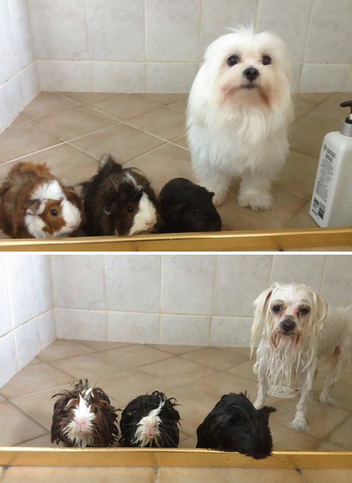 29 foto divertenti di cani prima e dopo un bagno keblog - Bagno cane dopo antipulci ...