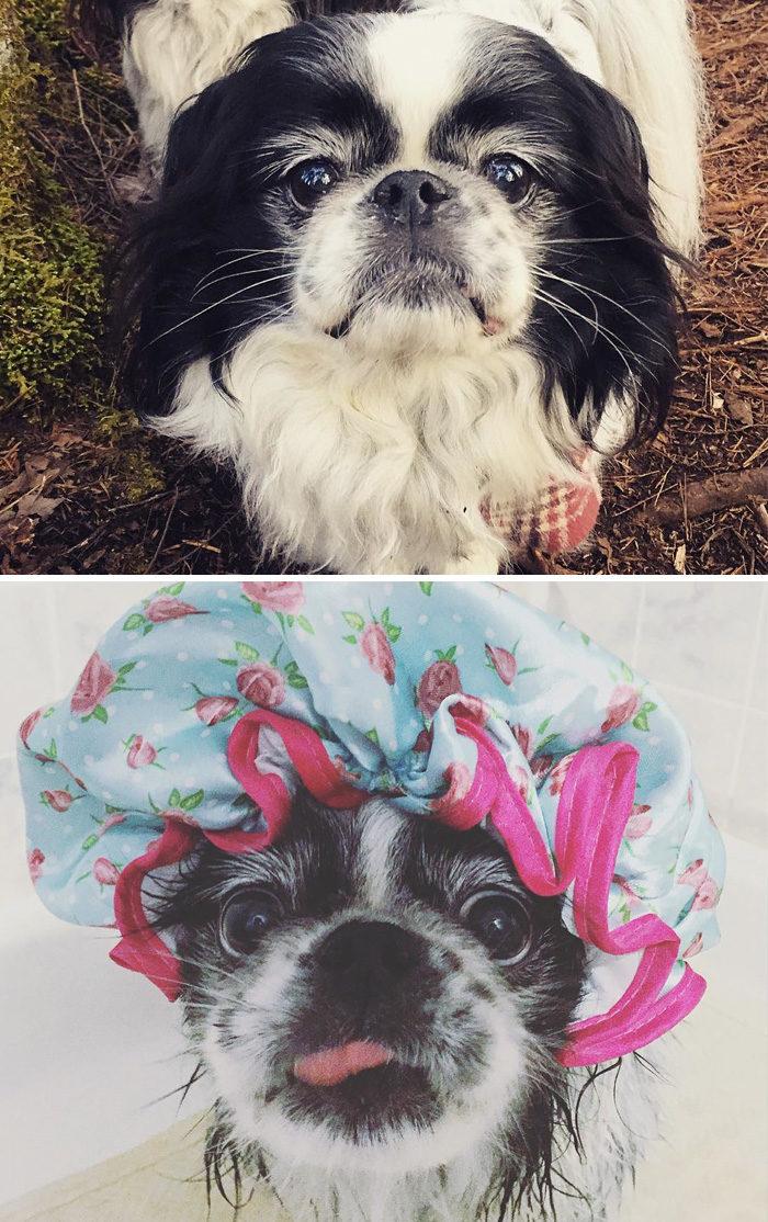 foto-cani-bagnati-prima-dopo-bagno-20