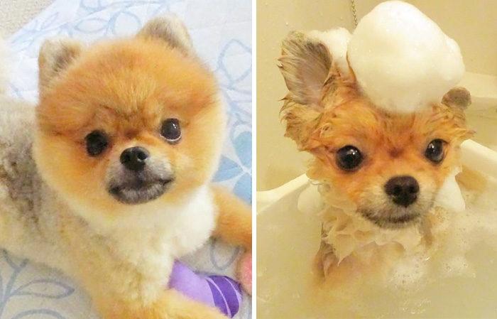 foto-cani-bagnati-prima-dopo-bagno-24