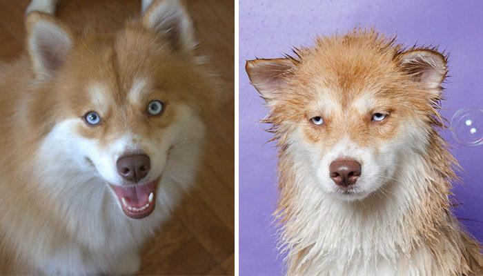 foto-cani-bagnati-prima-dopo-bagno-25