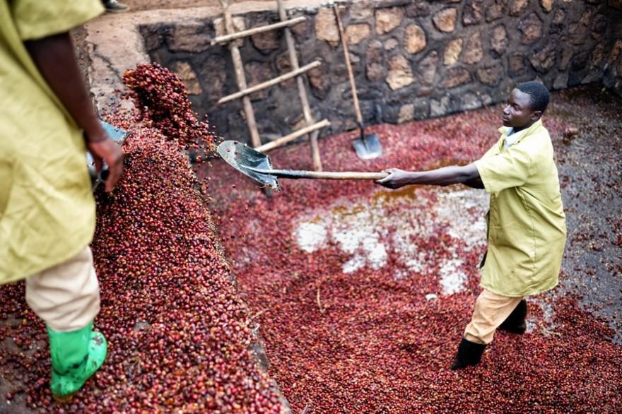 foto-ruanda-produzione-caffe-ritratti-alan-schaller-02