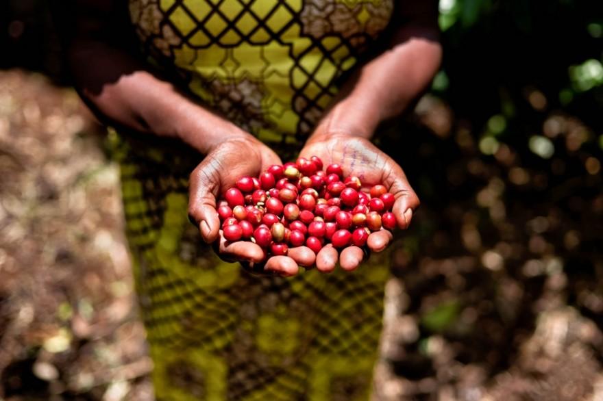 foto-ruanda-produzione-caffe-ritratti-alan-schaller-09