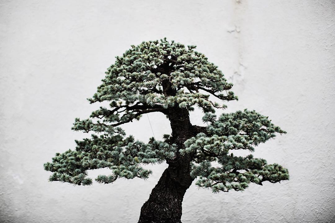 fotografia-alberi-bonsai-libro-stephen-voss-02