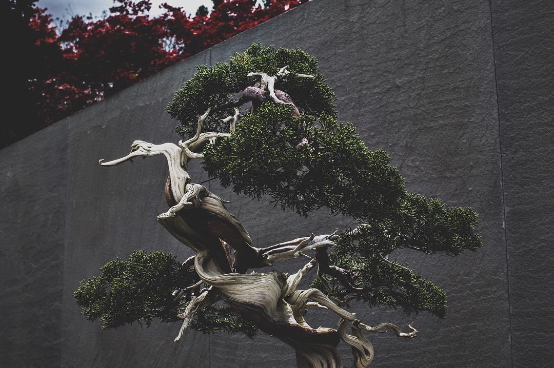 fotografia-alberi-bonsai-libro-stephen-voss-03