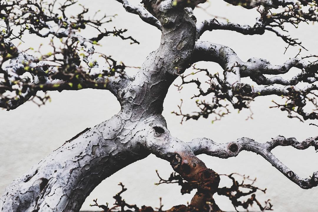fotografia-alberi-bonsai-libro-stephen-voss-04