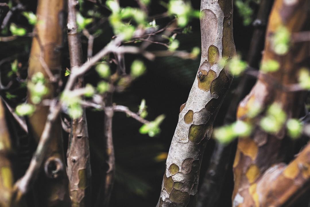 fotografia-alberi-bonsai-libro-stephen-voss-05