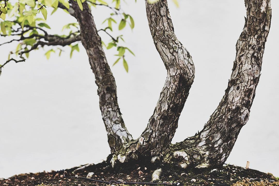 fotografia-alberi-bonsai-libro-stephen-voss-06