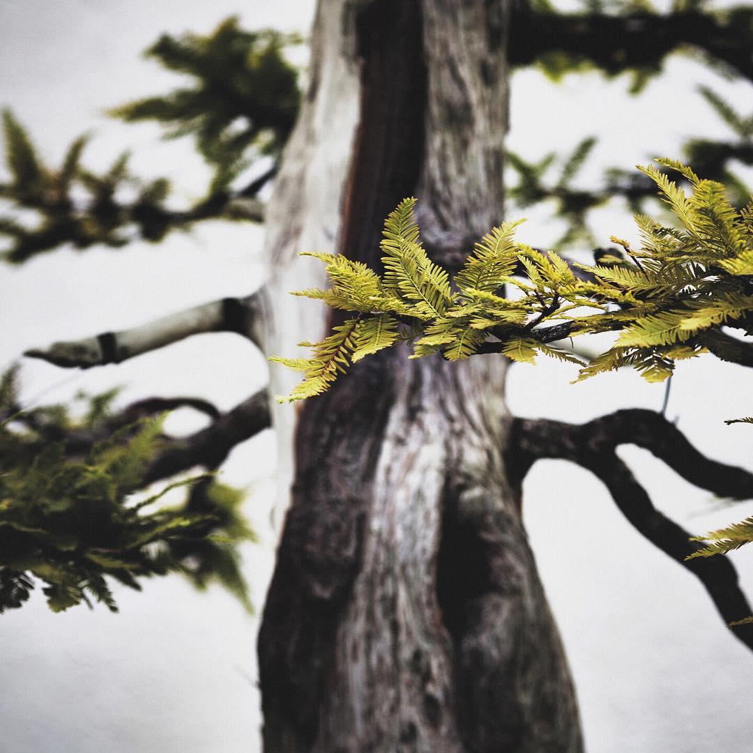 fotografia-alberi-bonsai-libro-stephen-voss-08