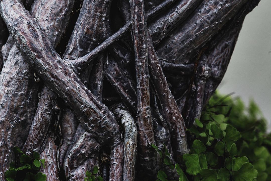 fotografia-alberi-bonsai-libro-stephen-voss-10