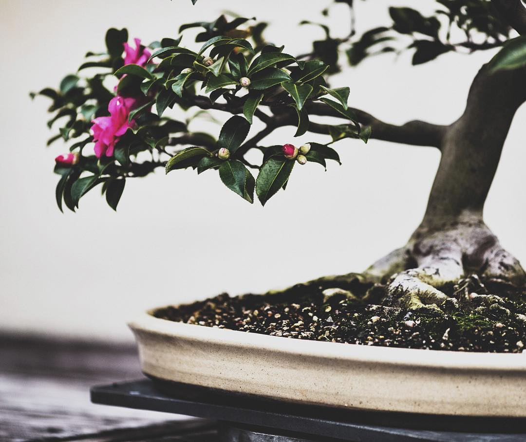 fotografia-alberi-bonsai-libro-stephen-voss-11