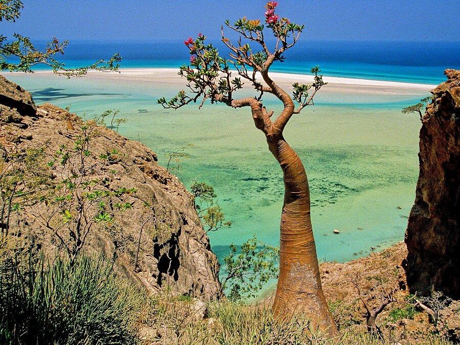 isola-socotra-yemen-dracena-alberi-piante-aliene-03