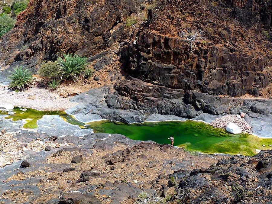 isola-socotra-yemen-dracena-alberi-piante-aliene-04