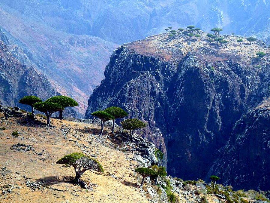 isola-socotra-yemen-dracena-alberi-piante-aliene-17