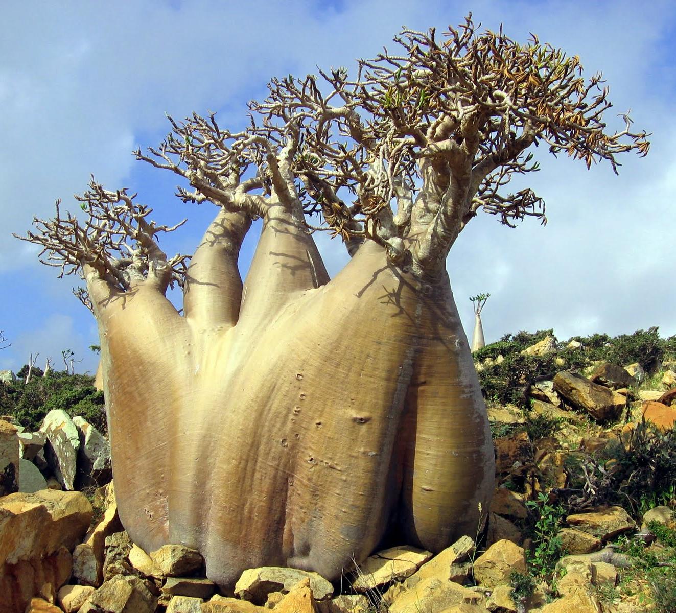 Piante Strane Da Appartamento strane piante su un'isola sperduta che sembra un pianeta alieno