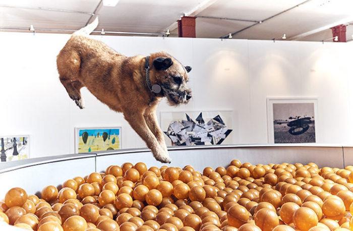 prima-mostra-arte-cani-dominic-wilcox-more-than-londra-3