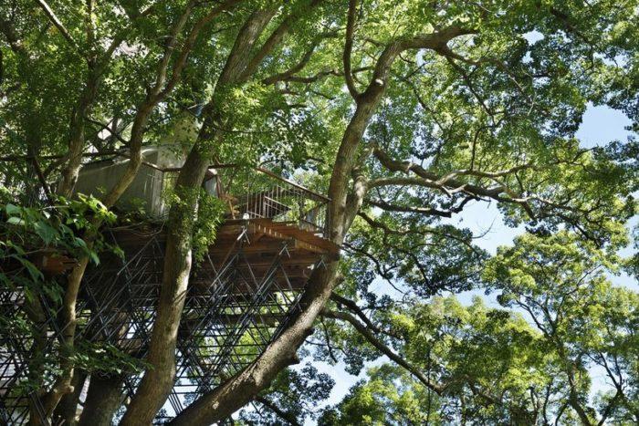 sala-te-su-albero-struttura-nido-uccelli-tearoom-hiroshi-nakamura-giappone-02