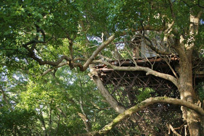 sala-te-su-albero-struttura-nido-uccelli-tearoom-hiroshi-nakamura-giappone-05