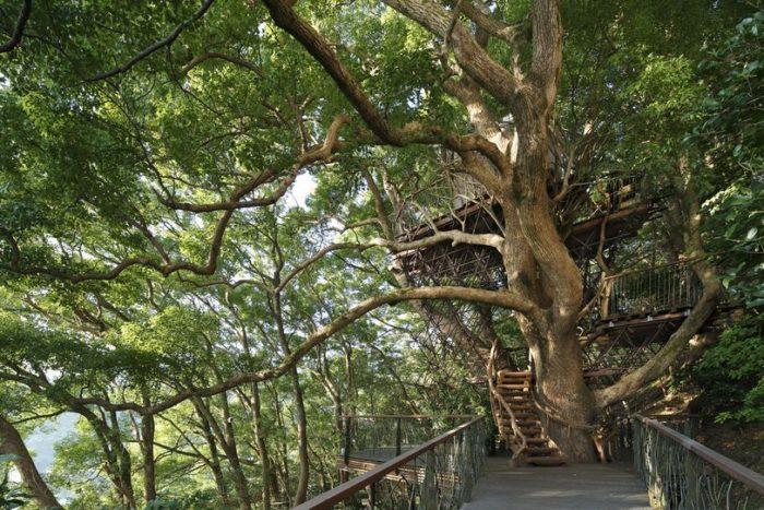 sala-te-su-albero-struttura-nido-uccelli-tearoom-hiroshi-nakamura-giappone-07
