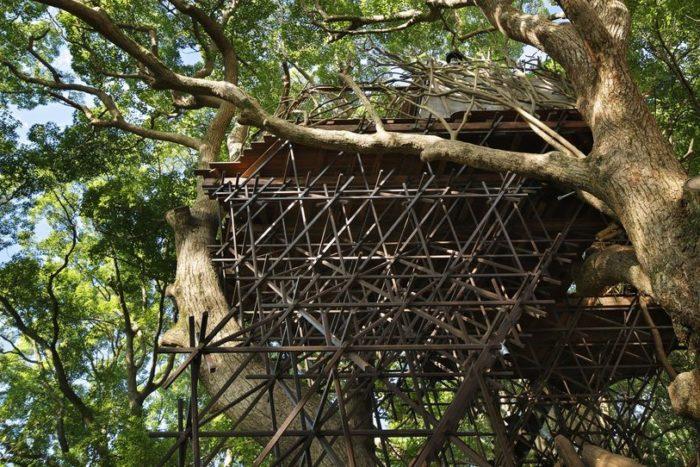 sala-te-su-albero-struttura-nido-uccelli-tearoom-hiroshi-nakamura-giappone-08