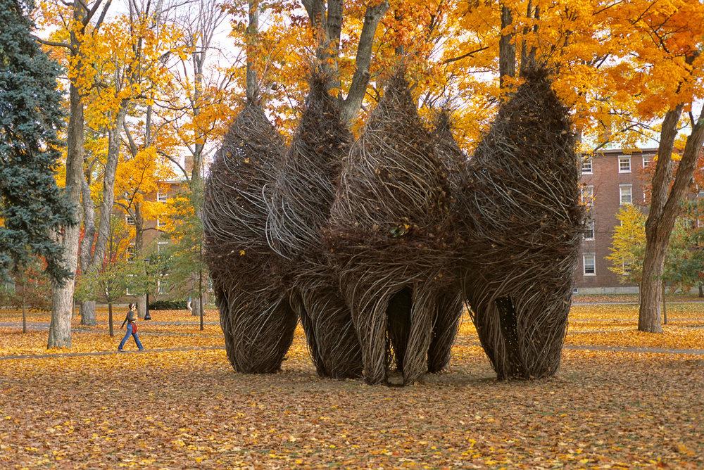 sculture-monumentali-legno-attorcigliato-patrick-dougherty-04