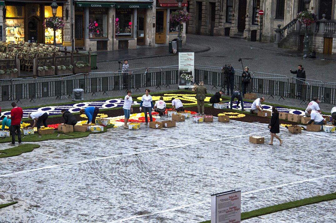 tappeto-fiori-petali-street-art-tapis-de-fleur-grand-place-bruxelles-13