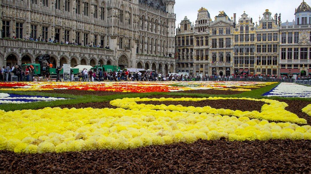 tappeto-fiori-petali-street-art-tapis-de-fleur-grand-place-bruxelles-16