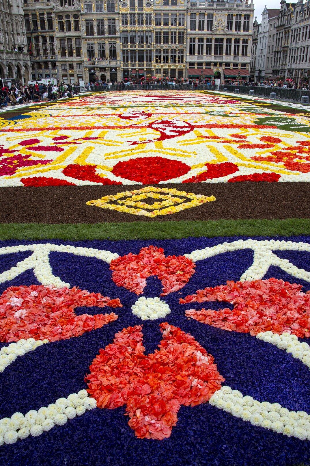 tappeto-fiori-petali-street-art-tapis-de-fleur-grand-place-bruxelles-17
