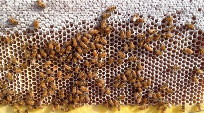 alveare-permette-estrazione-miel-rubinetto-flow-hive-3
