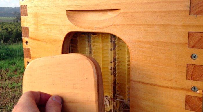 alveare-permette-estrazione-miel-rubinetto-flow-hive-7