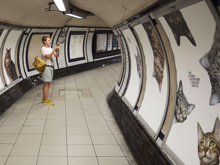 foto-gatti-sostituiscono-pubblicita-metropolitana-londra-cats-glimpse-01