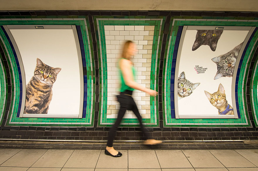 foto-gatti-sostituiscono-pubblicita-metropolitana-londra-cats-glimpse-02