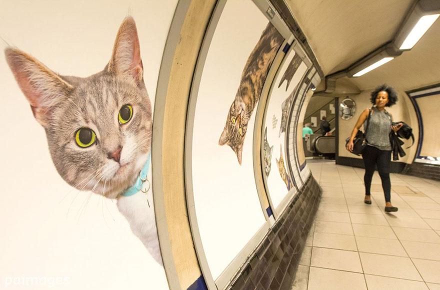 foto-gatti-sostituiscono-pubblicita-metropolitana-londra-cats-glimpse-03