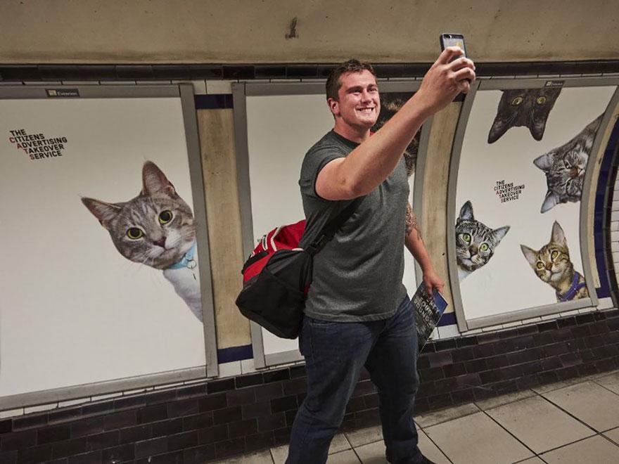 foto-gatti-sostituiscono-pubblicita-metropolitana-londra-cats-glimpse-04