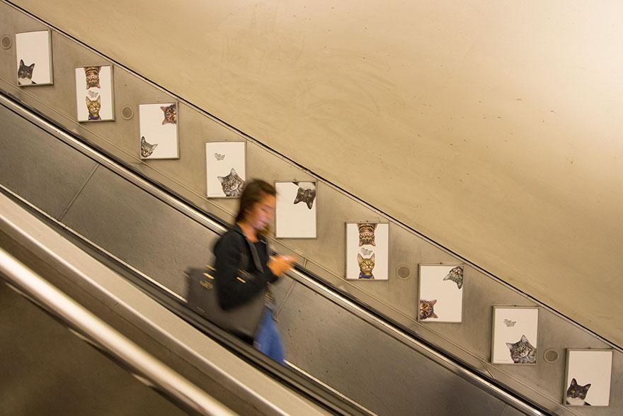 foto-gatti-sostituiscono-pubblicita-metropolitana-londra-cats-glimpse-05