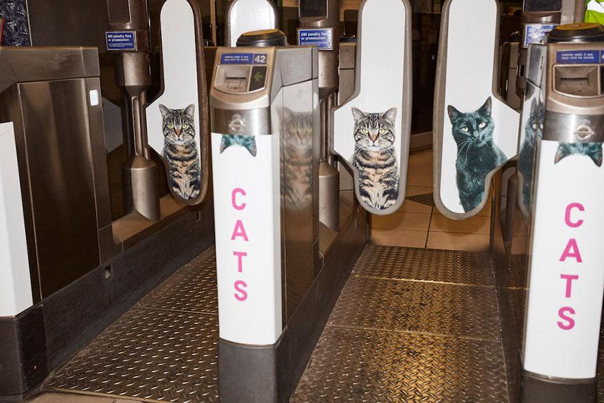 foto-gatti-sostituiscono-pubblicita-metropolitana-londra-cats-glimpse-06