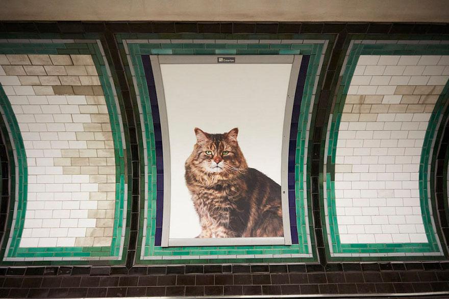 foto-gatti-sostituiscono-pubblicita-metropolitana-londra-cats-glimpse-07