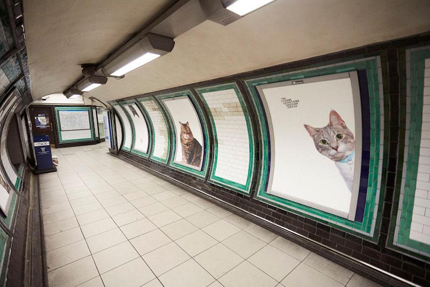foto-gatti-sostituiscono-pubblicita-metropolitana-londra-cats-glimpse-08